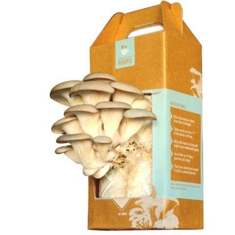 Набор для выращивания грибов
