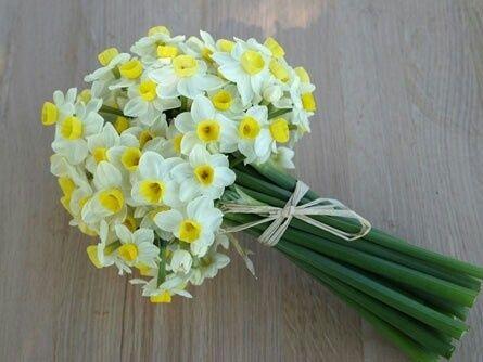Нарциссы-весенние цветы