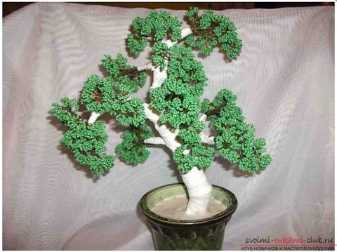 Усадка дерева