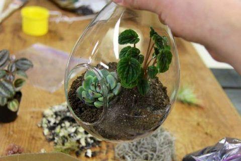 Усадка растения