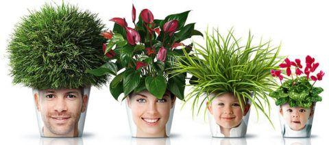 Комнатные растения с горшками с фотопечатью.