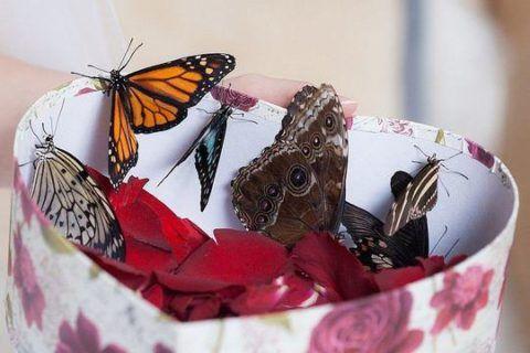 Коробочка с тропическими бабочками