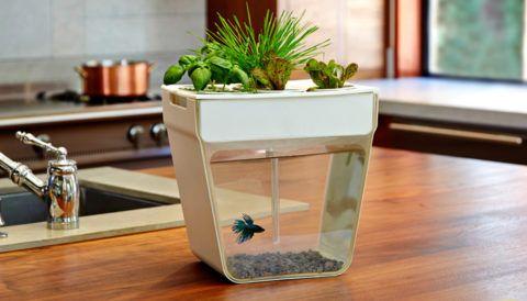 Самоочищающийся аквариум