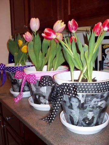 Тюльпаны в горшке с фотографиями.