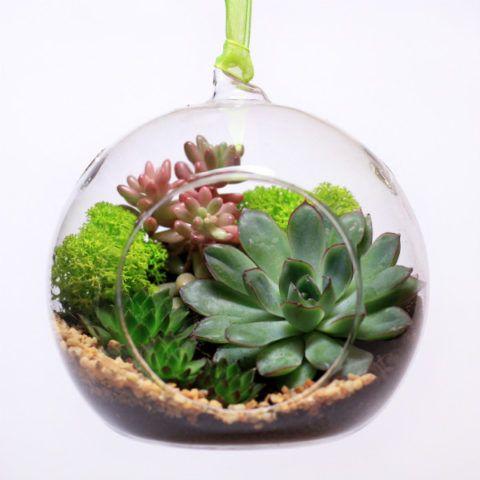 Вариант экзотических растений в подарок маме.