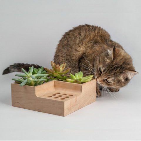 Держатель для карандашей с растением