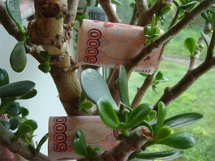 Посадить цветок денежный