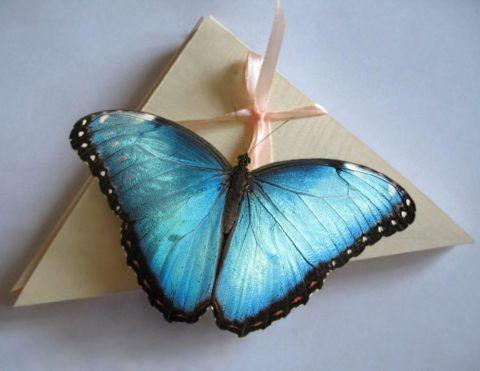 Бабочки в конвертах