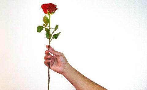 Лаконичная красная роза