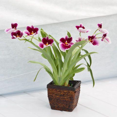 Подарите цветок в горшок, если женщина увлекается комнатным цветоводством.