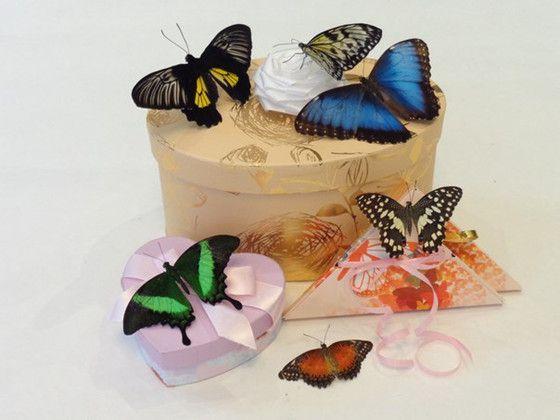 Бабочки в коробке подарок цена волгоград 68