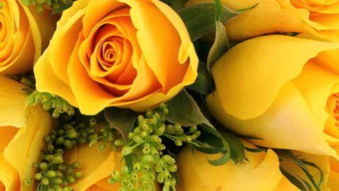 Желтые