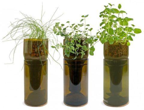Домашнее растение с системой автополива