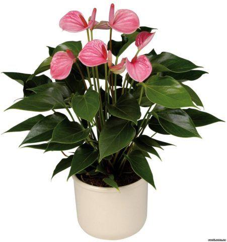 Красивый и нежный цветок.