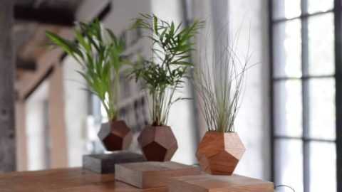 Левитирующие растения