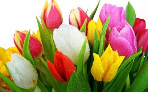 Нежные и красивые цветы по праву считаются самыми популярными.