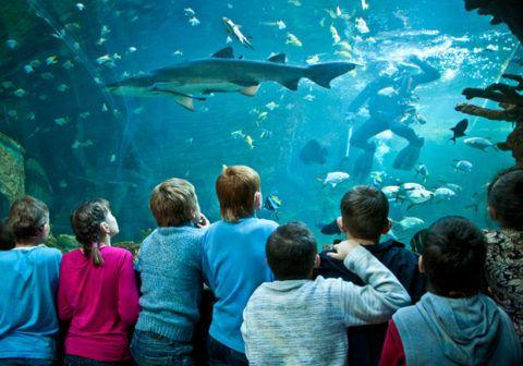 Волшебный подводный мир