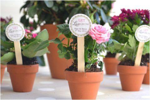 Милые и нежные цветы, которые займут почетное место на подоконнике.