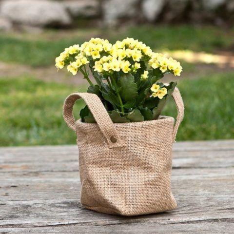 Не забудьте красиво упаковать этот цветок!
