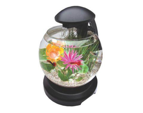 Небольшой аквариум, который поможет отвлечься от проблем.