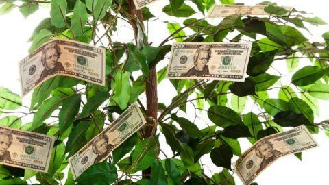 Украсьте деньгами настоящее дерево, только аккуратно, что не повредить листочки.