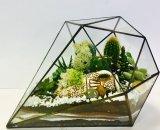 Флорариум украсит рабочее место