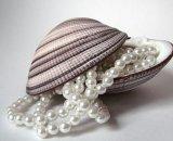 Жемчужное ожерелье в раковине